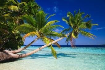 Palmbomen Malediven