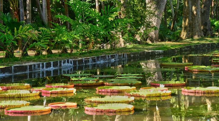 De botanische tuin van Pamplemousses
