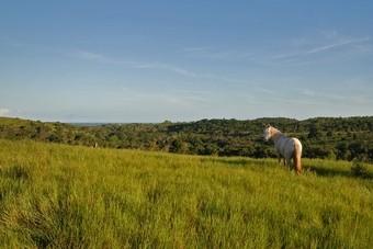 Paardrijden in Zuid-Amerika