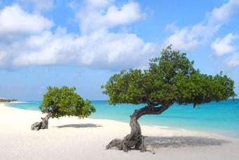 Witte stranden op Aruba