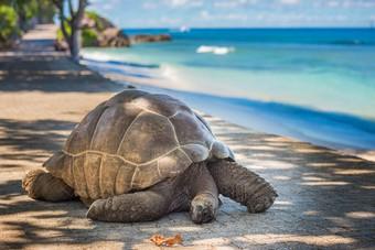 Nieuw bij Riksja Travel: Expeditie schildpaddeneiland