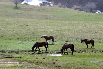 Paarden in het berglandschap van Oezbekistan