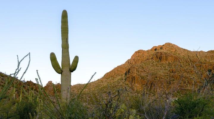Landschap Mexico met cactus