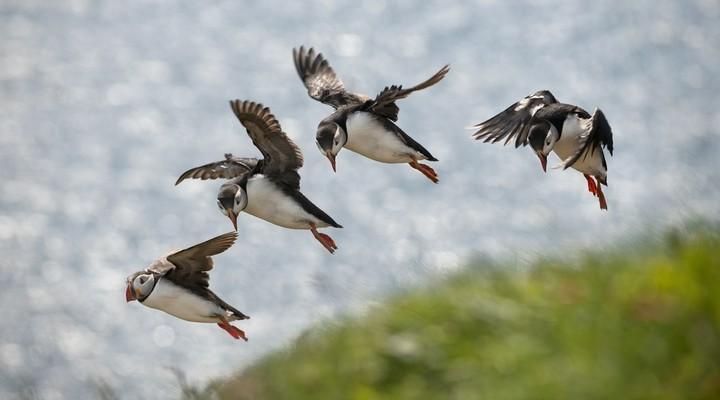 Vogeleiland Drangey