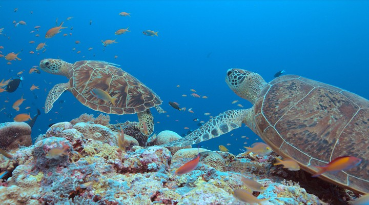 Tubbataha Reef, mooiste rif van de Filipijnen