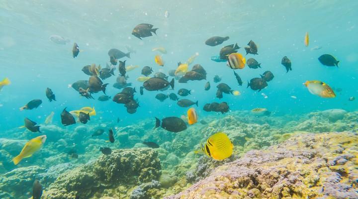 de unieke onderwaterwereld van Bonaire