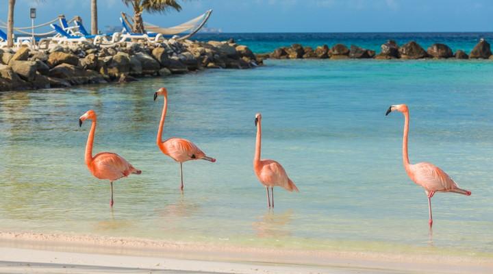 Renaissance Island flamingo's