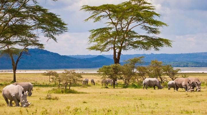 beste reistijd zuid afrika vliegtijd en beste maand reisbureauneushoorn in zuid afrika