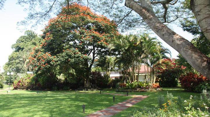 De tuin bij Hotel Bougainvillea