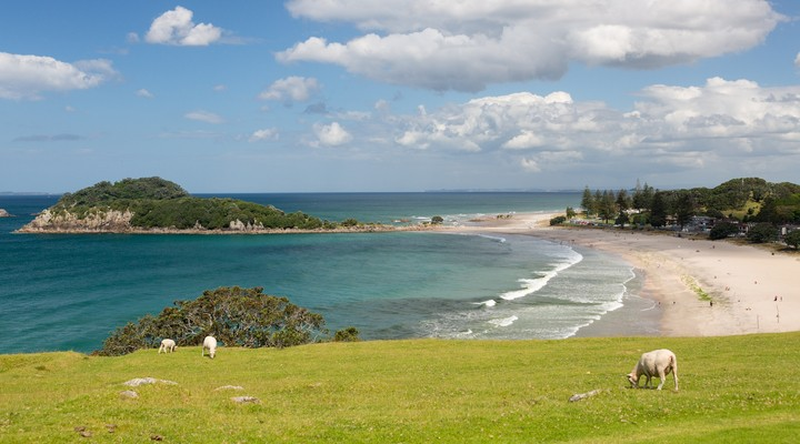 Tauranga Nieuw-Zeeland