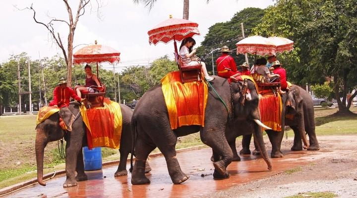 Toeristen maken een olifantenrit