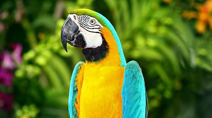 Een papegaai in het birdpark