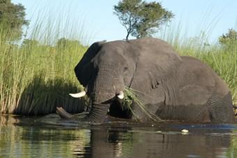 Nieuw bij Djoser: Rondreis Zuid-Afrika, Botswana en Zimbabwe