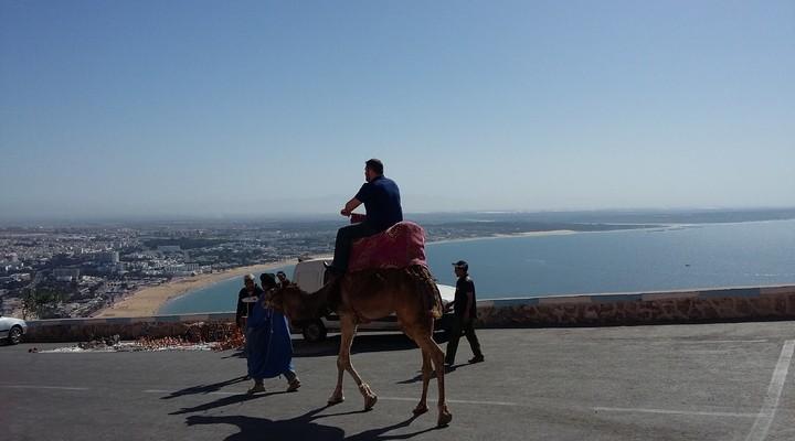 Kasba kameel