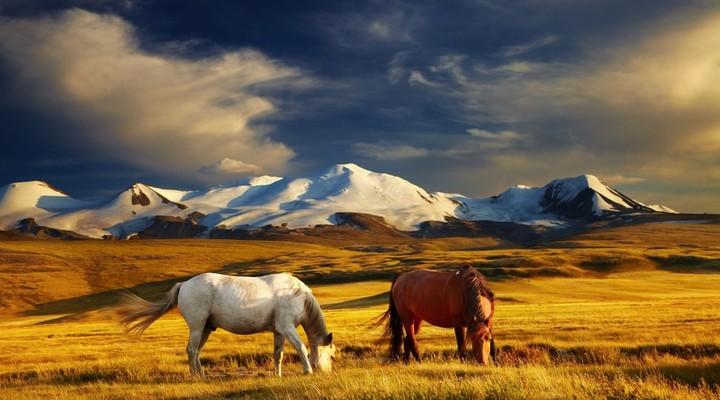 Paarden in droog landschap Mongolië