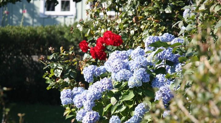 Spot vele bloemen in een van de tuinen in Skåne