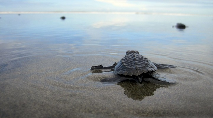Schildpaddenproject