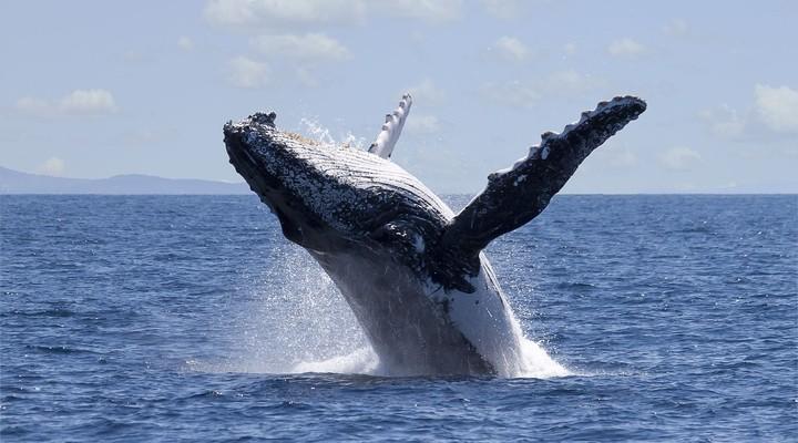 Walvissen spotten Halifax