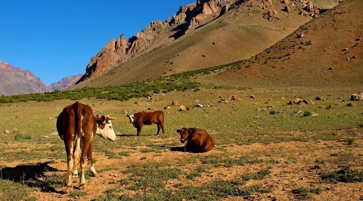 Eten in Argentinië: veel rundvlees