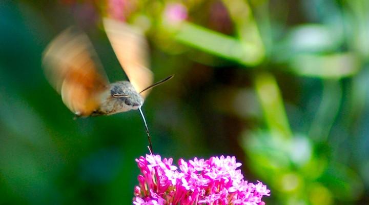 Vogels spotten in Suriname