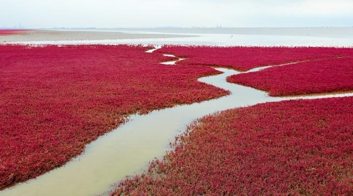 Het Rode Strand in Panjin