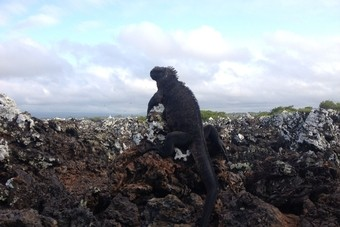 The Galapagos Manual