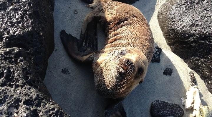 Een schattige zeehond