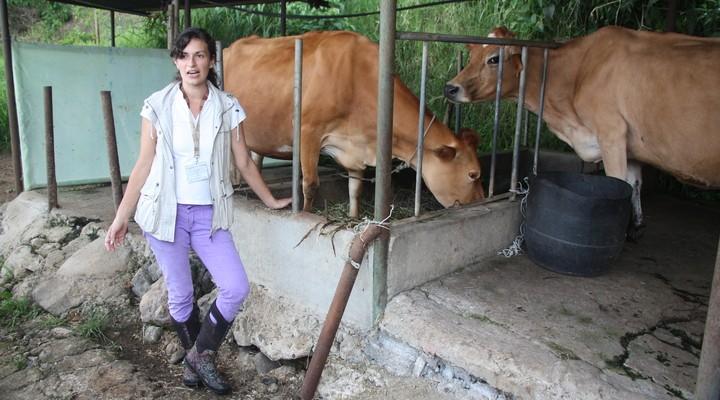 De kaasboerderij
