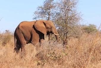 Nieuwe rondreis Mambo naar Zuid-Afrika, Botswana en Zimbabwe
