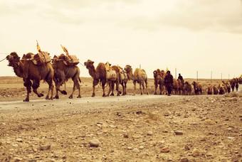 Kamelen op de Zijderoute