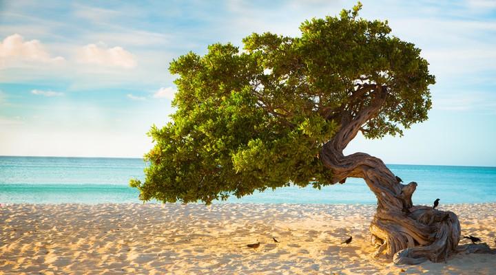 Strand met divi divi bomen op Aruba