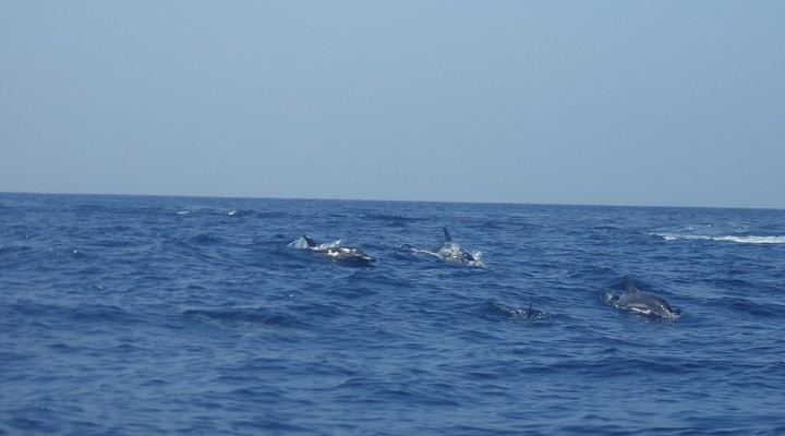 Wilde dolfijnen spotten