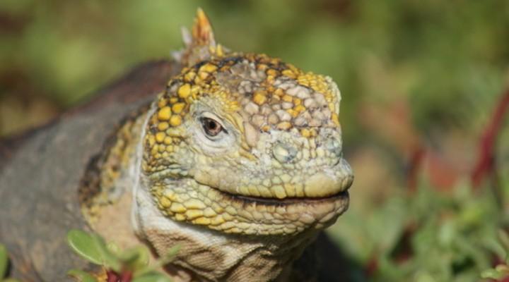 Unieke flora en fauna op de Galápagos Eilanden