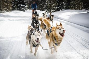 Nieuw bij Mambo: op winteravontuur in Zweden