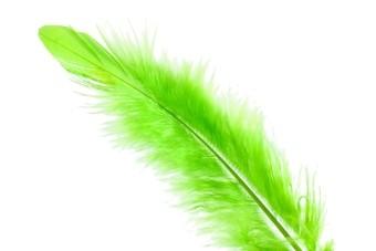 Koning Aap wint Groene Veer