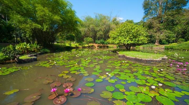 Botanische tuinen Peradeniya