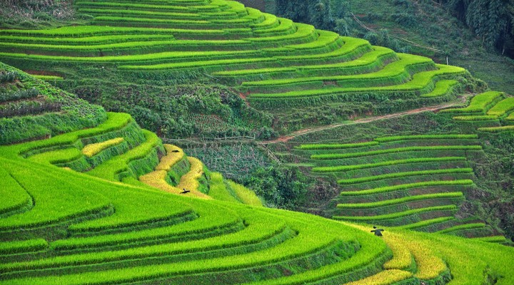 Felgroene rijstvelden in Sapa