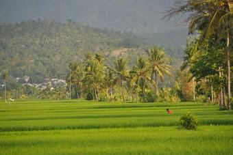 Costa Blanca en Lombok nieuwe zomerbestemmingen bij Alltours