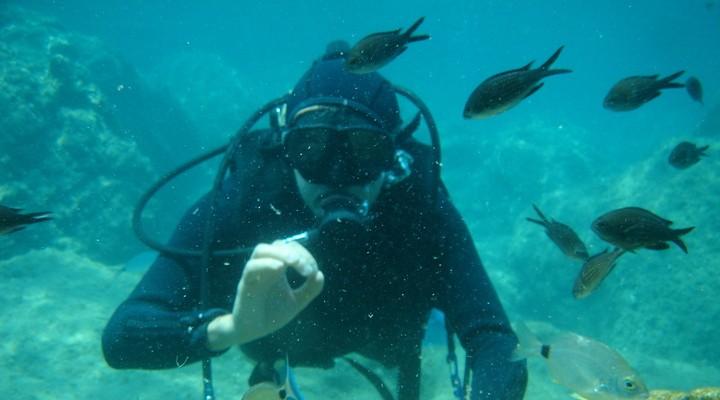 Duiker geeft sein onder water