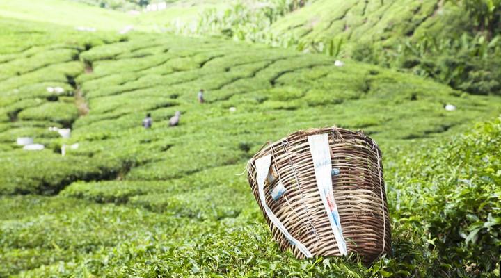 Darjeeling in India