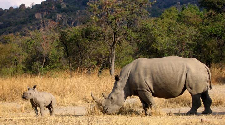 Neushoorn Zimbabwe Rondreizen
