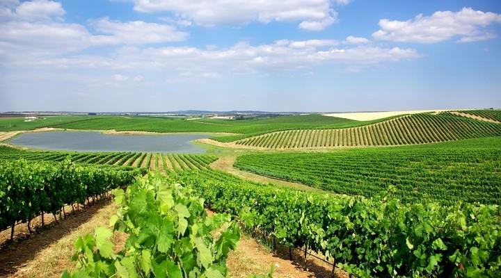 Prachtige wijngaarden in Alentejo