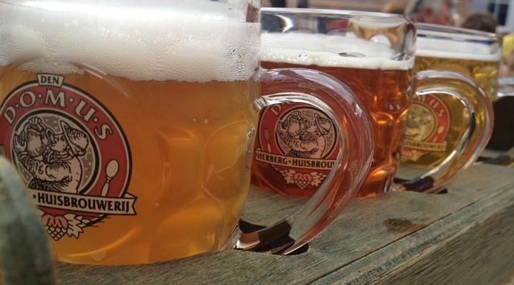 Domus bieren