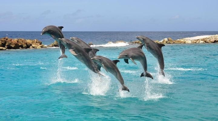 de dolfijnen van Curacao
