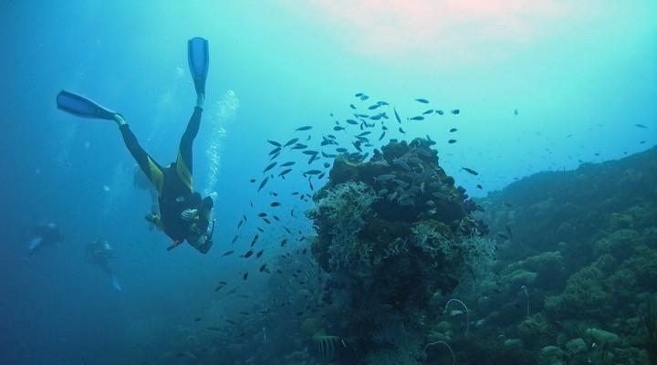 De onderwaterwereld van Guadeloupe
