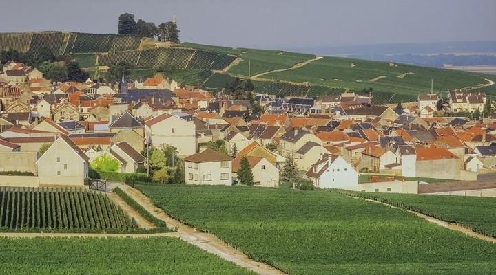 Wijngaarden Champagne-Ardenne