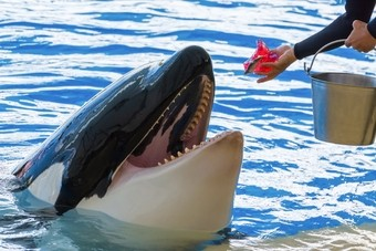 Thomas Cook schrapt orka-attracties