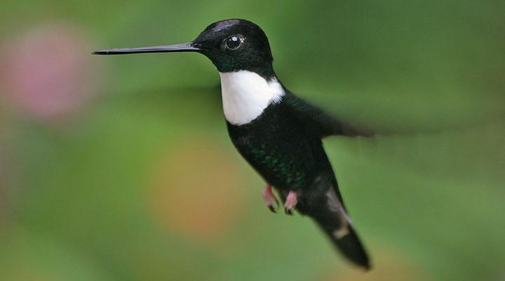 Landschappen en mooie natuur in Ecuador