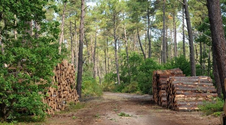 Pijnbomen La Foret, Les Landes