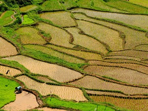 Sulawesi - Toraja Land